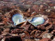 Muscheln am Strand von Vathy