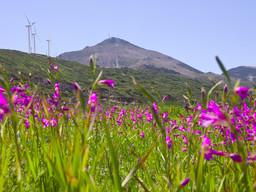 Natur und Vulkan Milos
