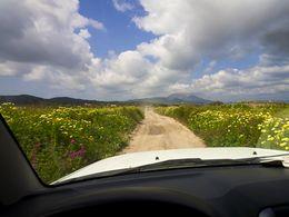 Fahrt durch die Felder bei Zephyria. (c) Tobias Schorr