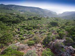 Eine Region auf West-Milos, wo es vor 300.000-600.000 Jahren Geysire gab. (c) Tobias Schorr