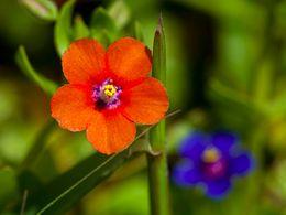 Kleine Blüten an der Nordküste von Milos. (c) Tobias Schorr