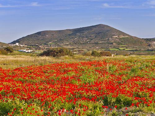 Mohnwiese und Vulkan auf Milos (c) Tobias Schorr
