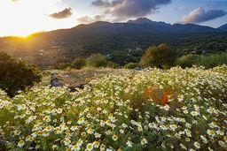 Frühlingsstimmung auf dem Vulkan Nisyros. (c) Tobias Schorr