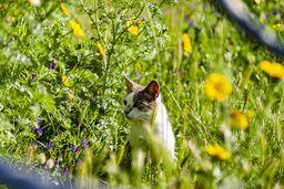 Katzen sind eine Bedrohung für die einheimische Reptilien- und Vogelwelt. (c) Tobias Schorr