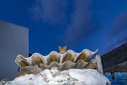 Eine Katze beobachtet den Fotografen. (c) Tobias Schorr