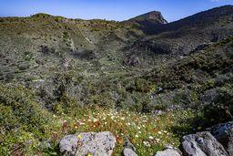 Das große Tal zwischen den Lavadomen und dem Caldera-Rand. Rechts ist ein jüngerer Lavastrom zu erkennen. (c) Tobias Schorr
