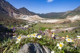 Frühlingsblumen vor dem vulkanischen Tal auf Nisyros. (c) Tobias Schorr