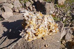 Gipskristalle, die sich im säurehaltigen Lehm gebildet haben. (c) Tobias Schorr