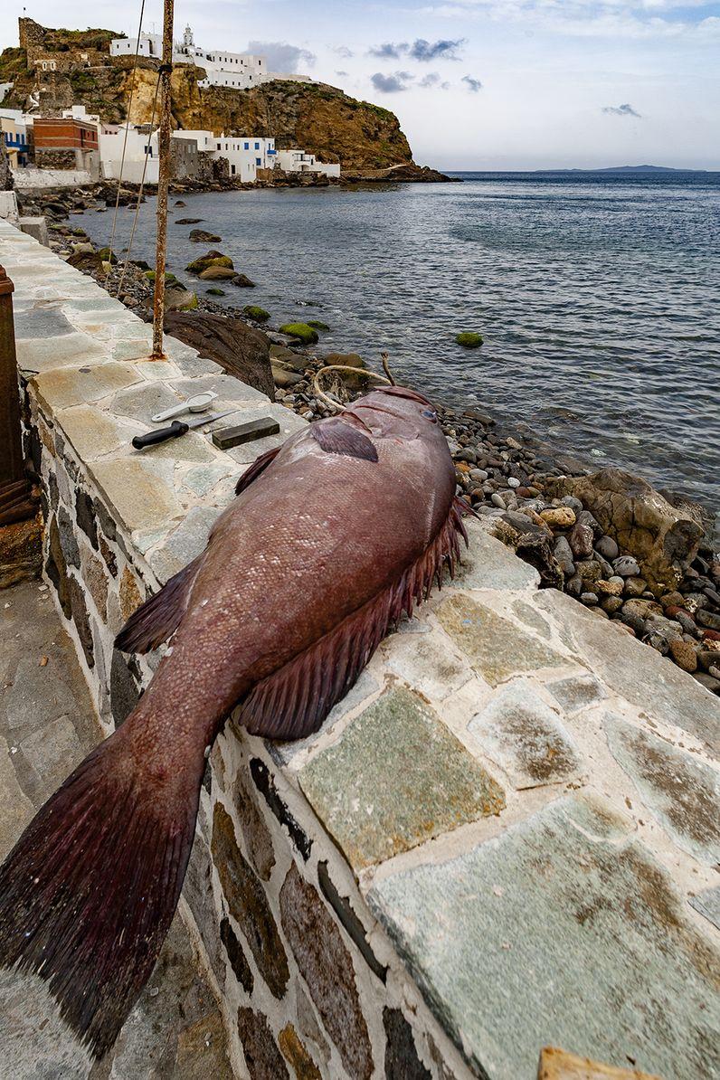 Ein frisch gefangener Seebarsch an der Seemauer in Mandraki. (c) Tobias Schorr