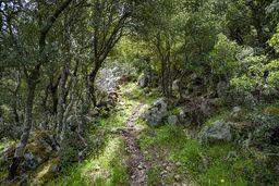 Der Wanderweg führt durch grüne Gebüsche. (c) Tobias Schorr
