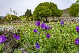 Eine Frühlingswiese bei Nikia. (c) Tobias Schorr