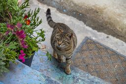 Die Tavernen-Katze :-) (c) Tobias Schorr
