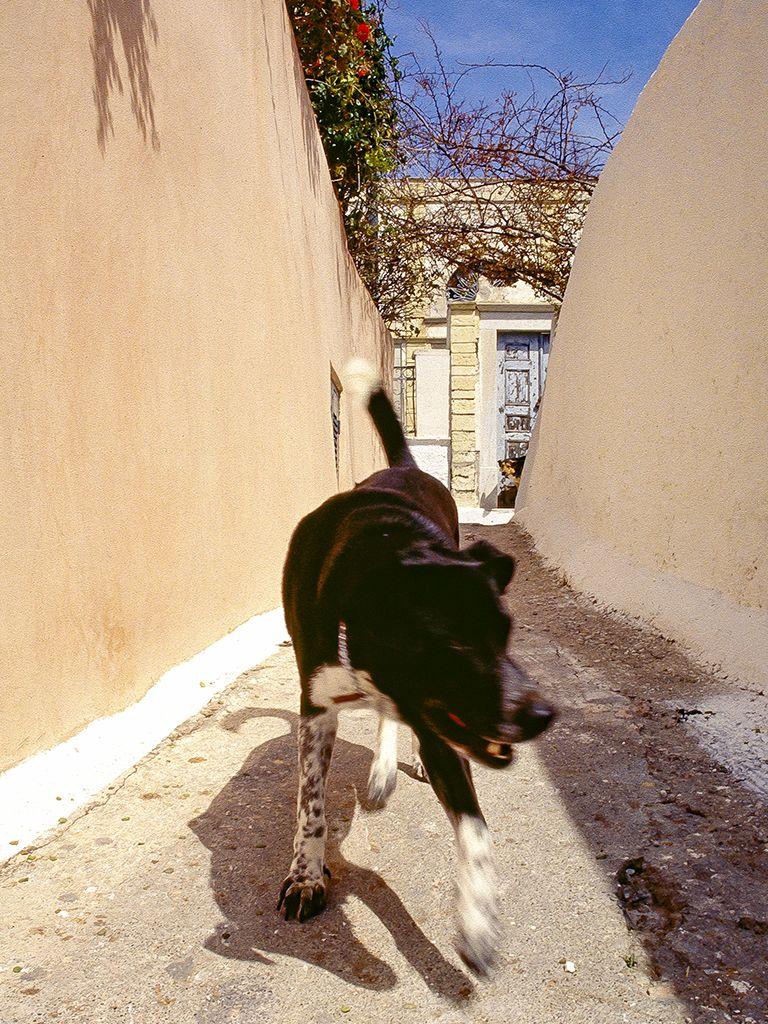 Streunende Hunde sind immer noch häufig in Oía. (c) Tobias Schorr
