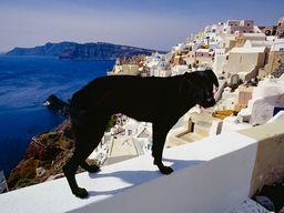 Streunende Hunde sind oft Begleiter bei Wanderungen. (c) Tobias Schorr