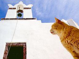 Katze vor der Theotokou-Kapelle in Oía. (c) Tobias Schorr