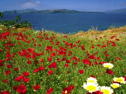 Spring atmosphere and a view to the volcanic island Nea Kameni