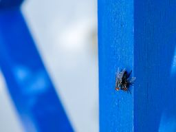 Auch Fliegen lieben Zweisamkeit :-) (c) Tobias Schorr