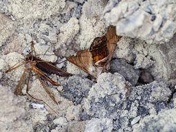 Έντομα και άλλα ζώα ασφυκτίζουν στα αέρια διοξειδίου του άνθρακα των μοφετών από το Σουσάκι. (γ) Tobias Schorr