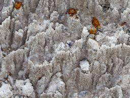 Kleine Säulen aus Gipskristallen werden vom Regen ausgewaschen. Sousaki. (c) Tobias Schorr