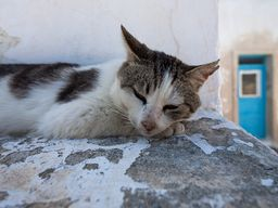 Den Schatten genießende Katze auf Thirasiá. (c) Tobias Schorr