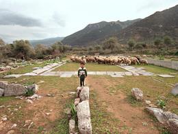 Kinder üben sich als Schafhirten im Asklepion (c) Tobias Schorr