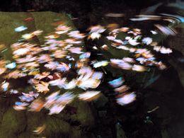 Die Strömung wirbelt Platanenblätter im Kreis herum (c) Tobias Schorr