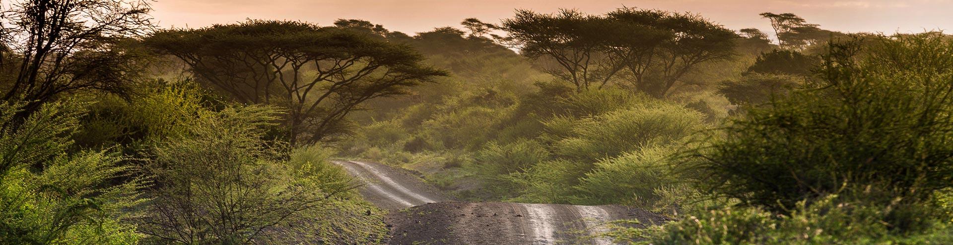 Morgendliche Fahrt durch Afrika