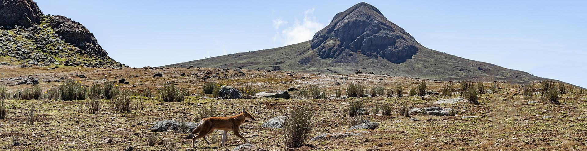 Das Bale-Gebirge in Äthiopien