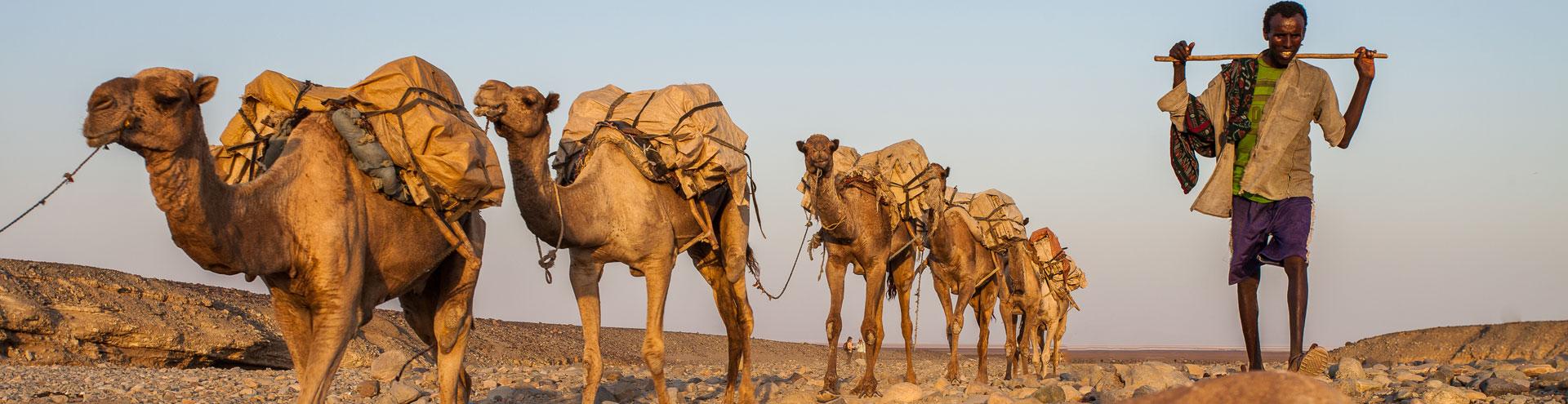 Salzkarawane in der Danakil-Wüste in Äthiopien